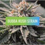 Bubba Kush, Bubba Kush Strain
